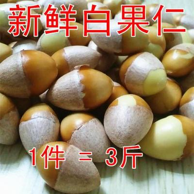 【新鲜天然老树生大白果仁】新鲜白果银杏果3斤银杏仁