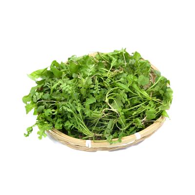 叶小米新鲜荠菜3斤现挖野菜野生混沌饺子春卷包子荠菜馅