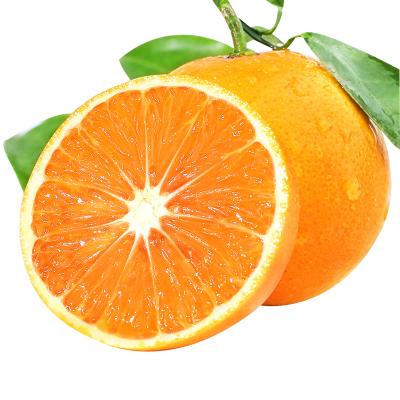 湖南麻阳冰糖橙带箱5斤大果 果径约60mm起 当季新鲜现摘香甜橙子应季孕妇水果