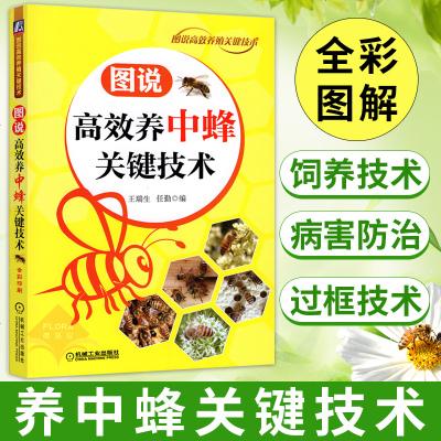 图说高效养中蜂关键技术 养蜂书中华蜂土蜂中蜂饲养新技术 中蜂养殖技术 养蜂技术养蜂书养蜂蜜蜂 蜜蜂养殖技术大全书