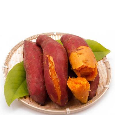 米又 福建六鰲紅心地瓜 沙地種植小番薯2.5斤 小果(拍2件合并發貨)
