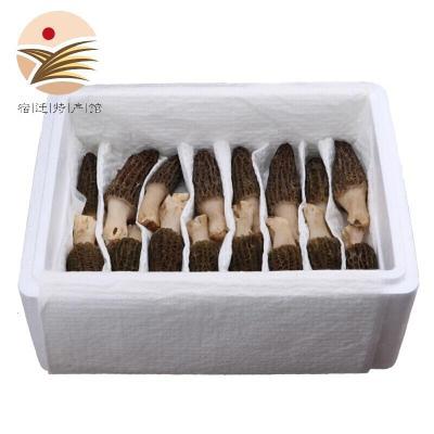 羊肚菌新鮮云南特產羊肚菌蘑菇非干貨鮮羊肚蘑菌500g