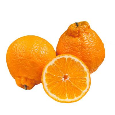 四川丑橘不知火5斤装 丑桔 丑橘子 新鲜水果 当季柑橘