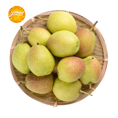 悠乐果 新疆库尔勒香梨4斤装 单果约100-150g 新鲜水果