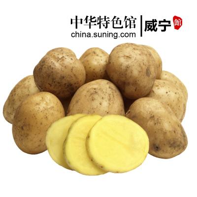 【中华特色】威宁馆 威宁土豆黄心洋芋马铃薯迷你小土豆洋芋5斤装新鲜绿色地标 西南