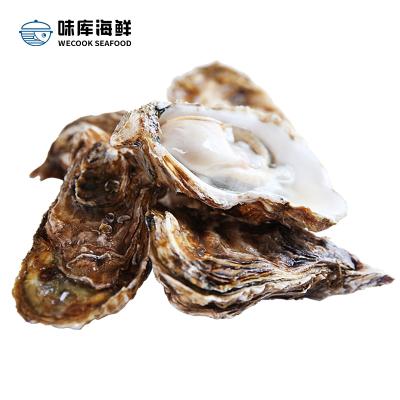 味庫【5斤裝 】鮮活生蠔鮮活牡蠣新鮮撈汁海鮮水產即食海蠣子(70-90克/一只)凈重4斤 容易打開 鮮嫩多汁