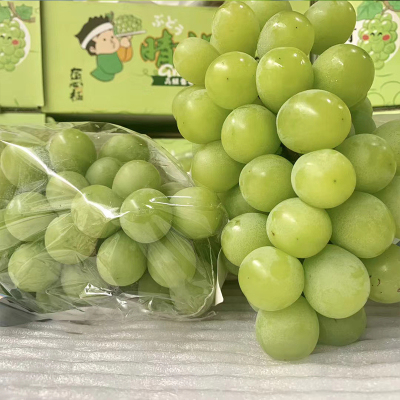 當季晴王葡萄2~4串4斤香印翠玉無籽青提子新鮮水果發順豐