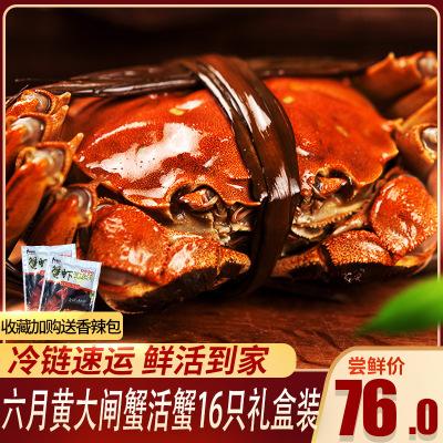 【順豐直發】臻佳肴六月黃大閘蟹買8送8 鮮活螃蟹16只1.2-.1.4兩 禮盒裝