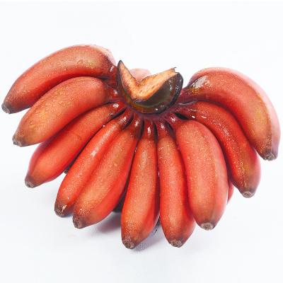 紅美人香蕉5斤 新鮮水果 紅皮小米蕉 芭蕉