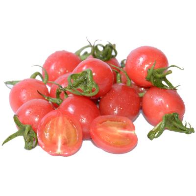 新鲜圣女果1斤装 新鲜圣女果西红柿新鲜水果孕妇小番茄