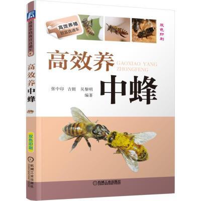 高效養中蜂 雙色印刷 養蜂書籍大全技術蜜蜂中蜂養殖書養蜂養蜜蜂技術教程指南 良種繁殖 蜂病防治技術 養蜂手冊養蜂技術書