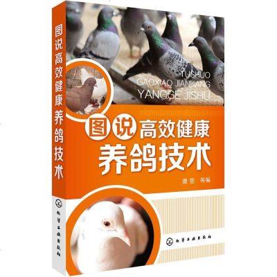 正版 圖說高效健康養鴿技術  鴿子苗小鴿 養殖 鴿子養殖技術書大全  安全用藥 肉鴿養殖技術書籍  飼養管理 常見病