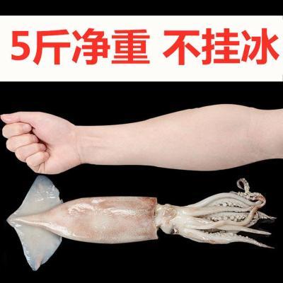 凈重大魷魚整只新鮮冰鮮海鮮水產生鮮魷魚燒烤火鍋冷凍槍整只烏賊 5斤大魷魚