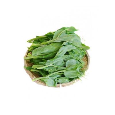 豌豆尖 3斤 新鲜蔬菜豌豆叶 豌豆苗 火锅龙须菜 时令菜