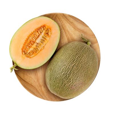 【悠樂果】西州蜜哈密瓜新鮮水果蜜瓜香瓜甜瓜網紋瓜