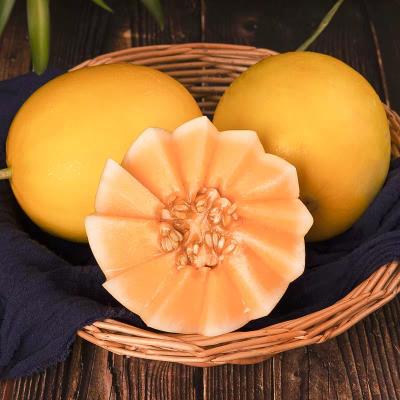 (偶數件發貨)陜西黃河蜜瓜5斤裝黃金蜜瓜新鮮水果