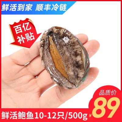 WECOOK鮮活鮑魚 味庫大連活鮑魚10-12頭裝 大個頭鮮活海鮮水產批發