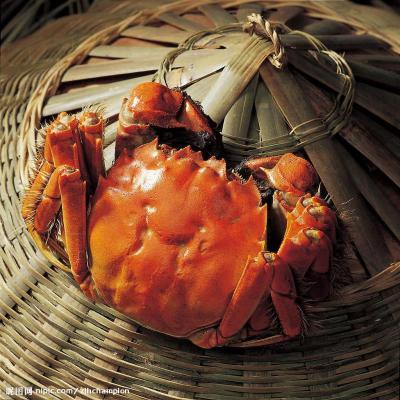 【驚喜預售】品味私廚 陽澄湖大閘蟹 蟹禮禮盒(公3.0兩+母2.0兩 4對)