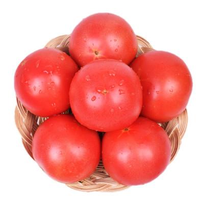 普罗旺斯西红柿2.5斤装 新鲜粉西红柿子 非有机蔬菜水果大番茄生吃洋柿