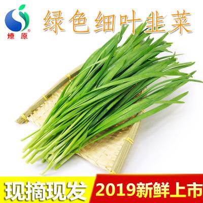 燎原 新鲜韭菜 现割现发 营养美味 1.5kg