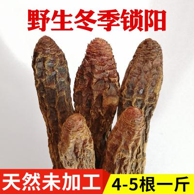 冬季金鎖陽短頭內蒙古特級正品500g男性滋補泡茶泡酒料材