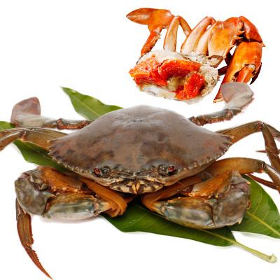 四海生鲜 野生渔船鲜捕红膏蟹(400-700g/只)青蟹鲜活包红膏 500g
