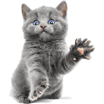 喜喵国际名猫 蓝猫英国短毛猫猫活体 宠物猫活体 猫咪活体 品种齐全 纯种宠物猫 幼猫幼崽宠物猫咪活体公母均有幼崽