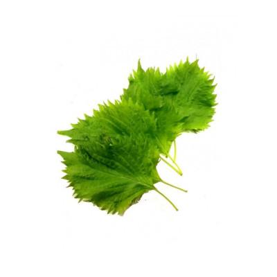 新鲜苏子叶 500g 菜韩国烤肉叶日式料理绿色蔬菜紫苏菜叶 200片左右