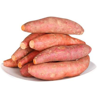 山东烟薯25号 红薯5斤装 适合烤地瓜 烤红薯