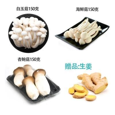 【有檢疫證】菌菇湯新鮮白玉菇150海鮮菇150杏鮑菇150贈姜