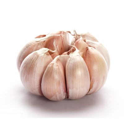 【抗疫助農】農家大蒜 凈2.5斤 大蒜頭 蘇寧生鮮 生鮮蔬菜 調味品 陳小四水果