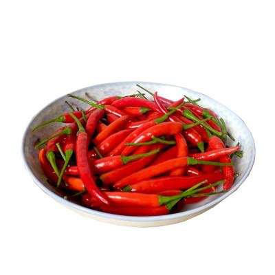 新鲜小米椒 正宗小米辣椒 1.5KG 小尖椒 小米七星椒 红辣椒 尖椒 新鲜蔬菜