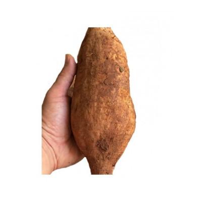 新鲜葛根 5斤 藤县和平粉葛 无渣粉嫩农家新鲜 生葛薯