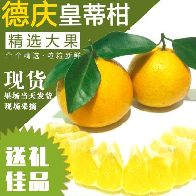 果子现摘 10斤装 正宗德庆皇帝柑 贡柑 新鲜整箱现摘现发 橘子桔子当季水果橙子