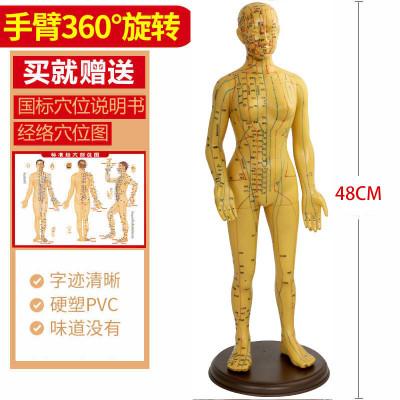王太医针灸穴位经络人体模型小铜人男女模特超清晰通用高中医教学家用 女款可旋转