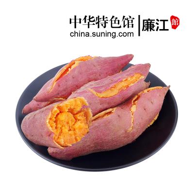 【中华特色】廉江馆 西瓜红红薯 5斤简装 单个125-200g 甜地瓜蜜薯番薯 新鲜农家蔬菜 华南