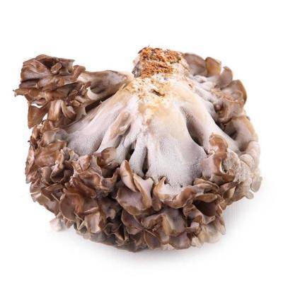 【有檢疫證】灰樹花150g/盒舞茸新鮮菌菇