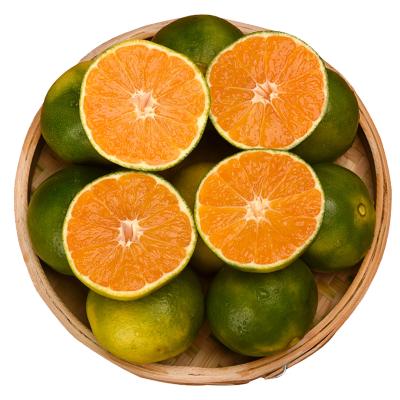 鮮菓籃 云南蜜桔新鮮橘子5斤裝 應季鮮果 新鮮水果