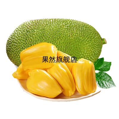 海南菠蘿蜜1個 21-25斤 黃肉菠蘿蜜 新鮮水果 生鮮水果 國產水果 陳小四水果