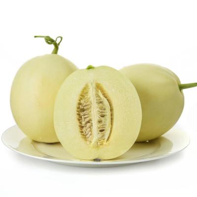 【預售4月底發貨】陜西閻良甜瓜 5斤 新鮮水果 蘇寧生鮮水果 陳小四水果 水果禮盒